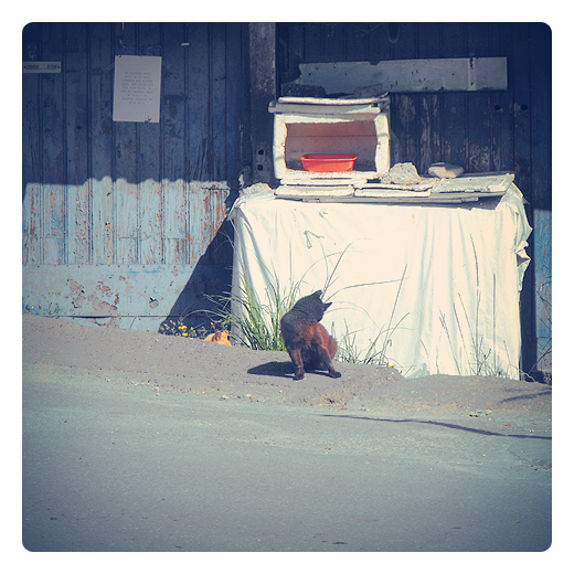 gato peinandose, aseado, limpio, vida de aventura, callejero, casetas, alimentar animales callejeros, refugio, gato negro, fotografia de Torrelavega
