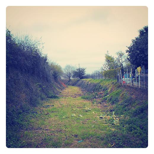 proyecto olvidado, abandonado, intento fallido, falta de prevision, alfombra verde, invasion vegetal, paisaje de arboles, Sierrapando, fotografia de Torrelavega