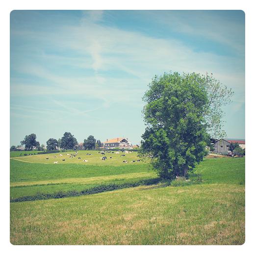 arbol solitario, soledad, paisaje de arboles y casas, prado con vacas, dia soleado, Caserios, fotografia de Torrelavega