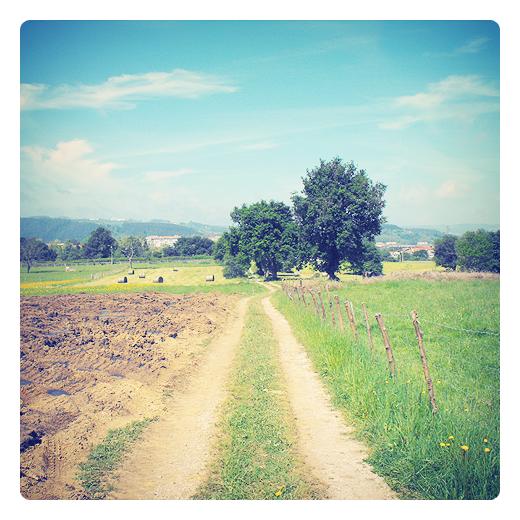 Tierra de labor, labores del campo, agricultura, rodadas camino, paisaje de arboles, horizonte de montañas, tierra arada, dia soleado, fotografia de Torrelavega