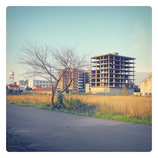 esqueletos, esqueleto arbol, esqueleto edificio, arbol sin hojas, estructura, carretera comarcal, hierba seca, tarde soleada, Mies de Vega, fotografia de Torrelavega