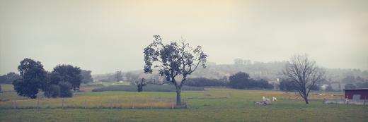 tarde brumosa, paisaje de arboles, horizonte de montañas, bruma, arbol sin hojas, agricultura y ganaderia, fotografia de Torrelavega
