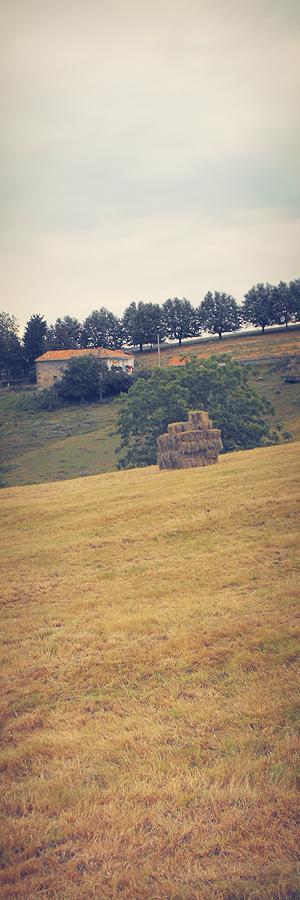 campo segado, labor agricola, paca de hierba, paisaje de arboles y casa, cresta, prado amarillo, La Montaña, fotografia de Torrelavega