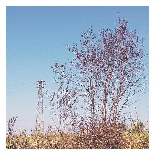 tierra quemada, restos de un incendio, torre electrica, hierba seca, color amarillo, cielo despejado, verano, fotografia de Torrelavega