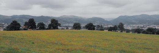 Valle del Besaya, Comarca del Besaya, Torrelavega y su comarca, panoramica, horizontes de montañas, arboles en hilera, prado, Caserios, fotografia de Torrelavega