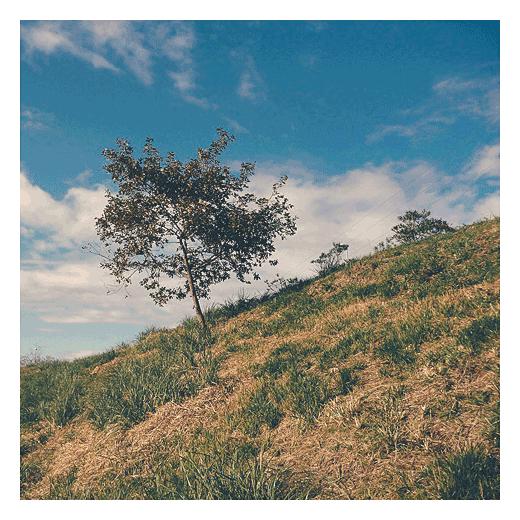 arbol solitario, pendiente de terreno, hojas secas, otoño, hierba seca, color verde, Tronquerias, fotografia de Torrelavega