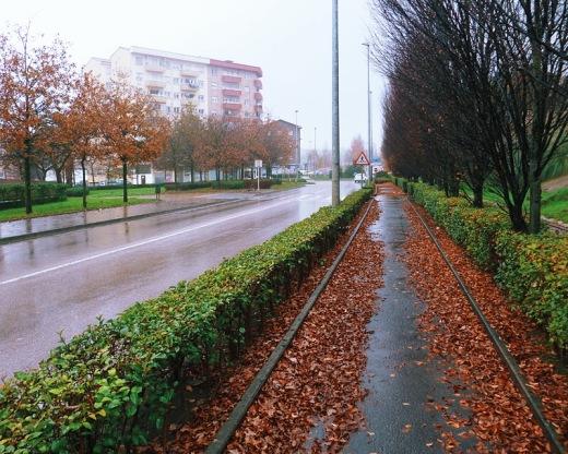 carril bici, infraestructuras de transporte, N-611, setos, hojas caidas, dia de lluvia, bruma, arboles sin hojas, fotografia de Torrelavega