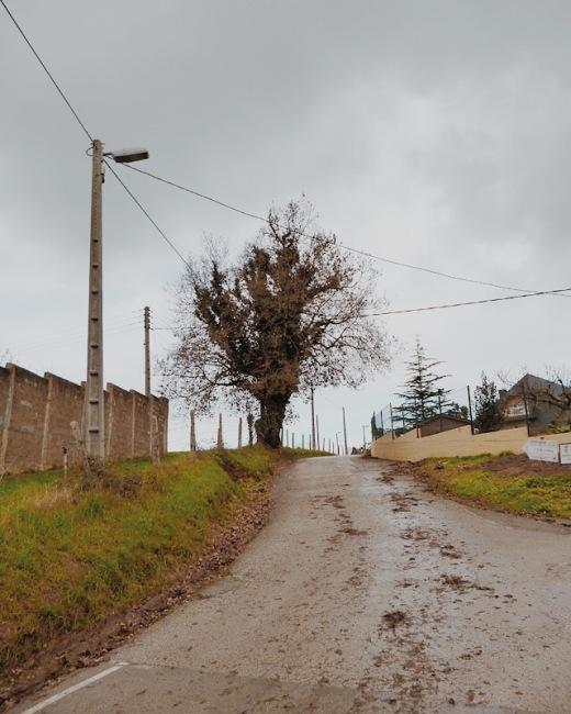 arbol solitario, pendiente de terreno, tendido electrico, muro, otoño, hojas secas, dia lluvioso y frio, fotografia de Torrelavega