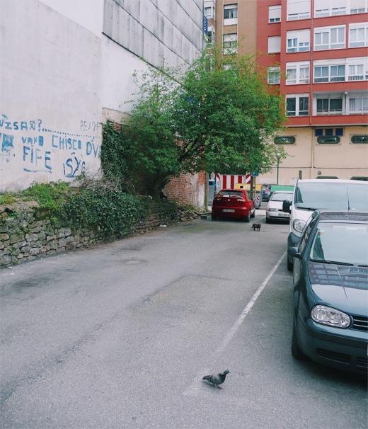 ecosistema, flora y fauna, diversidad, medio ambiente, casco urbano, urbanarbolismo, gato, paloma, arbol solitario, aparcamiento, fotografia de Torrelavega