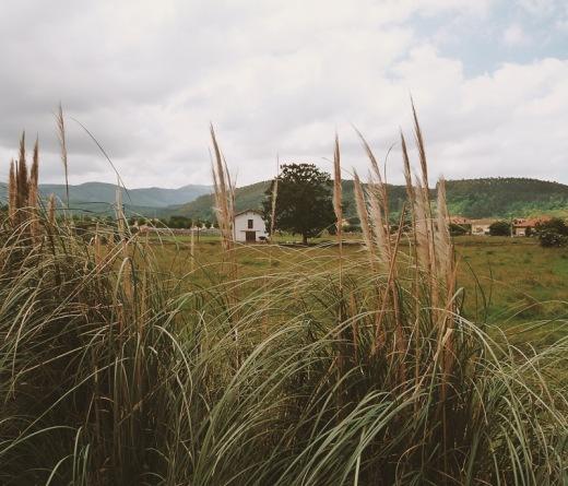 casa con arbol, horizonte de montañas, plumeros, planta invasora, paisaje de montañas, prado, cielo, fotografia de Torrelavega
