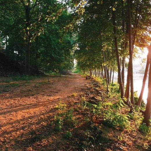 atardecer, puesta de sol, sol bajo, paseo junto al rio, arboles de ribera, rio Besaya, camino de tierra, tunel de arboles, fotografia de Torrelavega