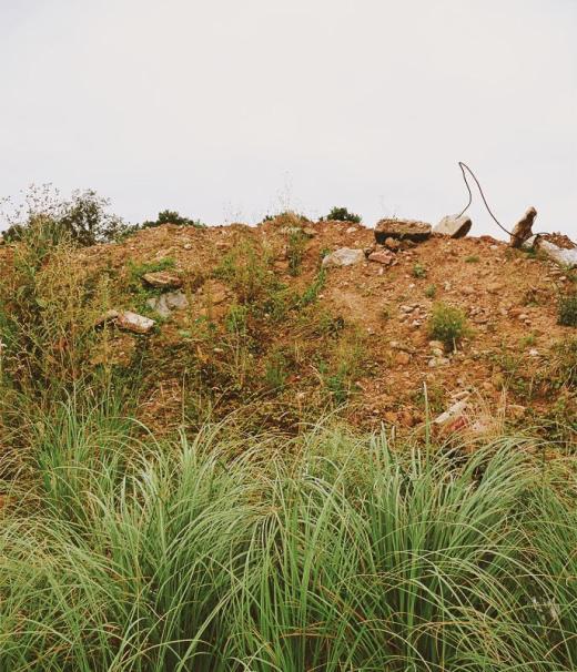 escombrera, residuos, abandono, tierra, plumeros planta, Cortaderia selloana, plantas invasoras, El Valle, fotografia de Torrelavega