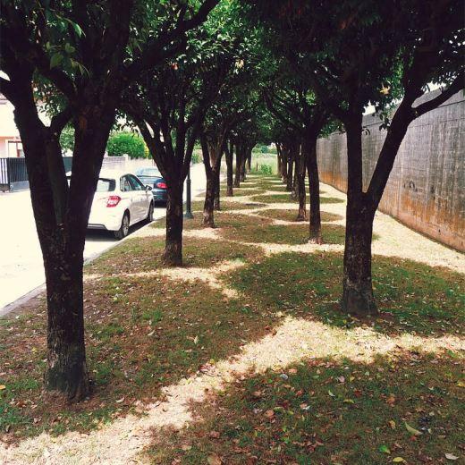 arboles en hilera. fila de arboles, sombra proyectada, dia soleado, prado, hojas caidas, muro, Barrio Covadonga, fotografia de Torrelavega