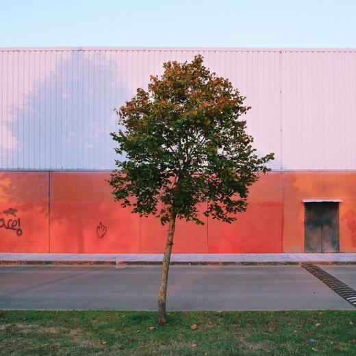 arbol solitario, pared de color, color naranja, puerta trasera, Polideportivo Municipal Rio Viar, Nueva Ciudad, fotografia de Torrelavega