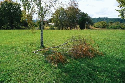 arbol herido, rama rota, hojas secas, prado, dia luminoso, sombra alargada, fotografia de Torrelavega
