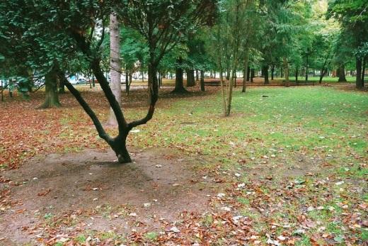 parque en otoño, Parque Manuel Barquin, hojas caidas, paisaje de arboles, prado, fotografia de Torrelavega