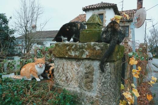 gatos callejeros, muro de piedra, casa con arboles, paisaje, otoño, fotografia de Torrelavega