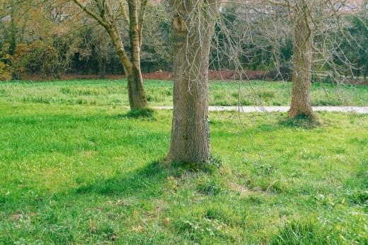 tres arboles, prado, carretera, bosque, Tronquerias, fotografia de Torrelavega