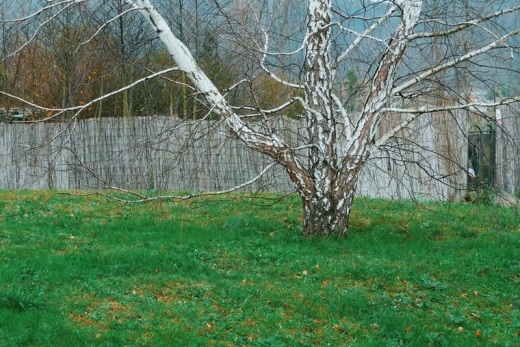 arbol sin hojas, alegoria, poesia visual, dia nublado, melancolia, fotografia de Torrelavega
