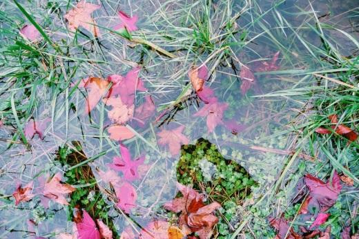 reflejo en el agua, prado inundado por la lluvia, autorretrato, fotografía de Torrelavega