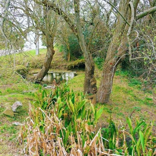 fuente agua, manantial entre arboles, prado verde, Caserios, fotografia de Torrelavega