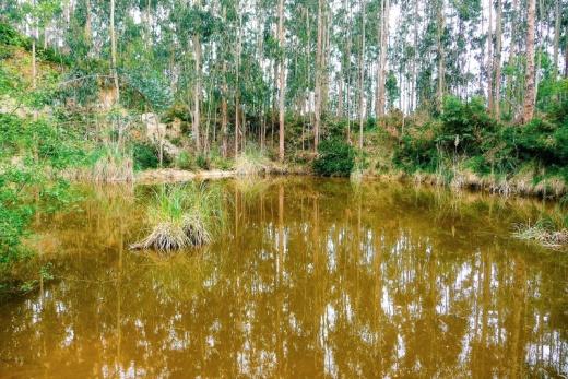 lago, monte, bosque de arboles, eucaliptos, ecosistema, naturaleza, fotografia de Torrelavega