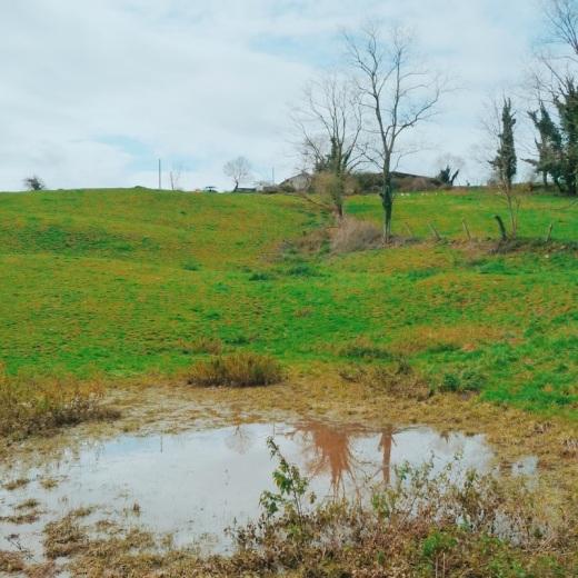 prado verde, charco de agua, poza, paisaje de arboles, dia lluviosos, fotografia de Torrelavega