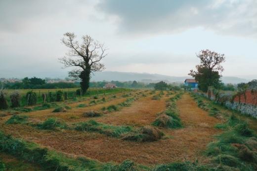 campo segado, labores agricolas, paisaje de arboles y montañas, niebla, Quiamingo, fotografia de Torrelavega