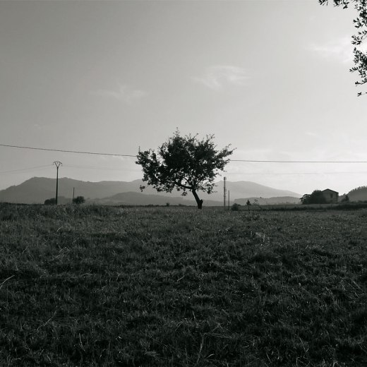 Prado con arbol, horizonte de montañas, niebla, linea electrica, Las Excavadas, fotografia de Torrelavega
