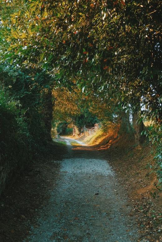 bosque, camino, rayos de luz, sombras, Tanos, fotografia de Torrelavega