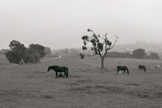 paisaje con niebla, arboles, montña, camino, Quiamingo, fotografia de Torrelavega