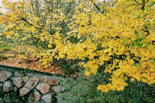 colores de otoño, hojas secas, hojas caidas, grupo de arboles, La Viesca, fotografía de Torrelavega