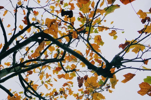 hojas arbol en otoño, ramas, colores de otoño, poesia visual, fotografia de Torrelavega