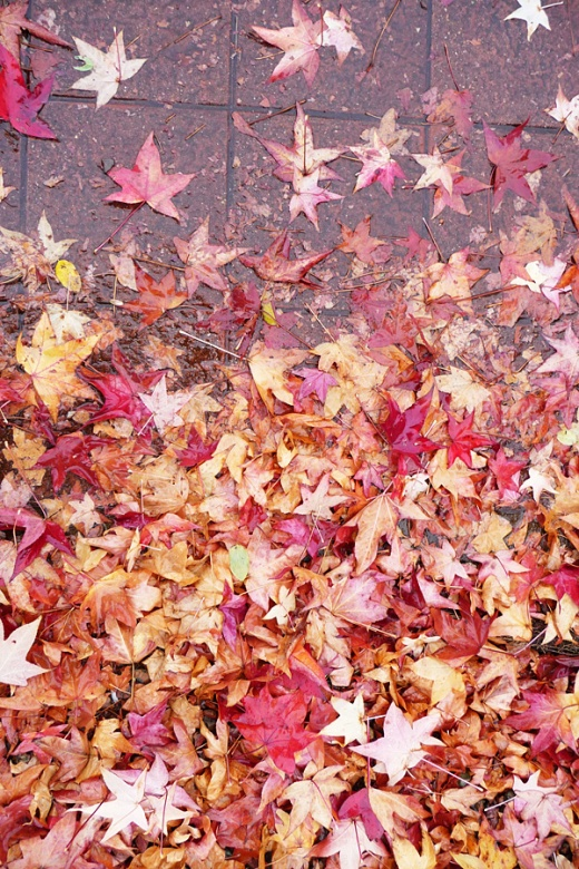hojas secas en el suelo, dia de lluvia, colores de otoño, fotografia de Torrelavega