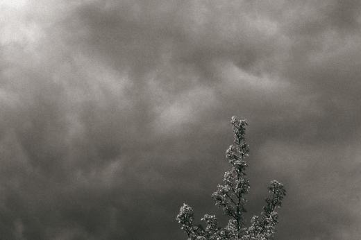 ramas, minimalismo, nubes, poesía visual