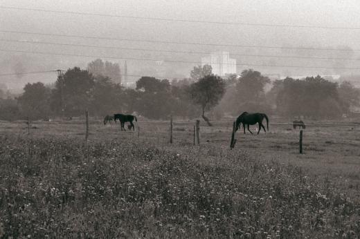 Siluetas, día de niebla, paisaje con árboles, cables de la luz
