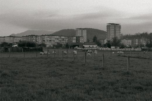 rebaño de ovejas,agricultura y ganadería , Torres del Barrio Covadonga, horizonte de montañas