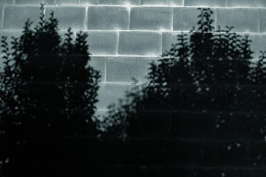 sombra proyectada en la pared, paisaje con árboles, siluetas