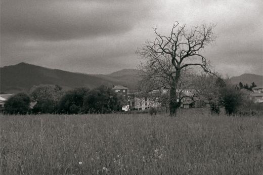 Atardecer, día nublado, pasiaje lineal, árbol, horizonte de montañas