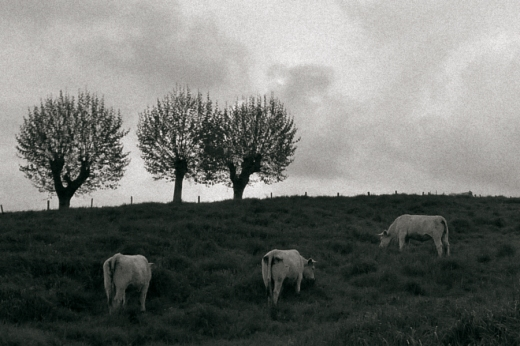 paisaje con árboles, siluetas, vacas en prado, cielo con nubes