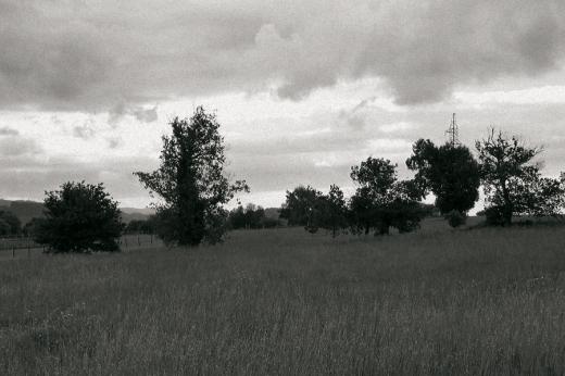 prado sin segar, paisaje de árboles, cielo con nubles, horizonte