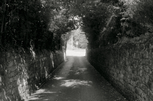 carretera entre árboles, sombra, día luminoso