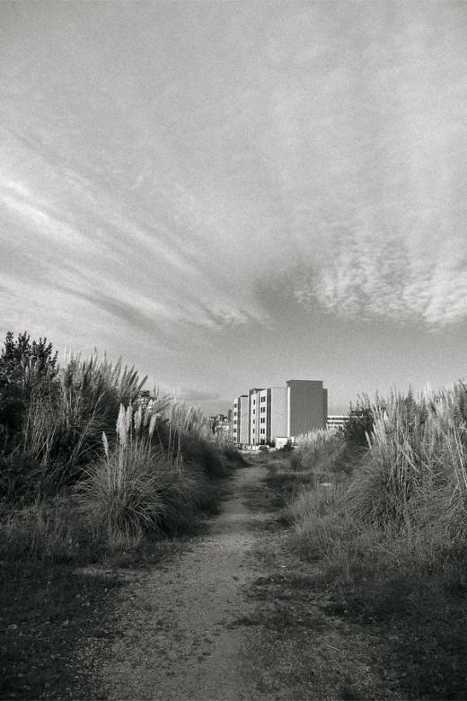 Extrarradio, las afueras, plumeros, planta invasora, paisaje con edificio, cielo