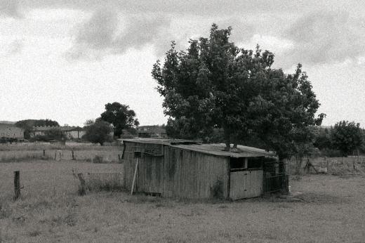 Árbol crece dentro de una casa, arquitectura popular, prado, cuadra, agricultura y ganadería